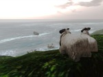 Sheep Watching