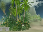 Palm arrangement from the Heart Garden Center