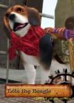 Lola the beagle